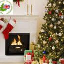 Christmas Tree Advice Featured Image