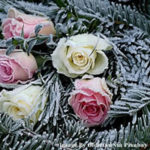 Grow Your Own Winter Wedding Flowers From Experts At Wyevale Garden Centre