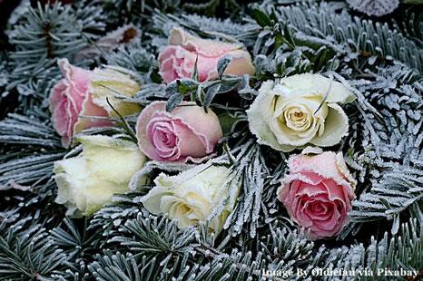 Wedding Flowers Show