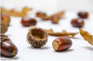 Christmas pine nuts
