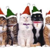 10 Festive Images To Start The Christmas Countdown!