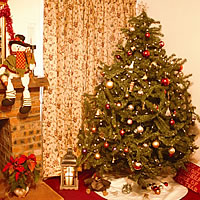 Christmas Tree World 7ft Mountain Pine Tree
