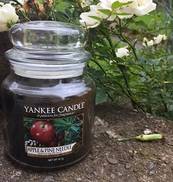 Yankee Candle Apple & Pine Needle