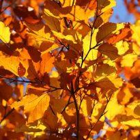 Bye Bye Bright Nights and HELLO Darker Autumn Days