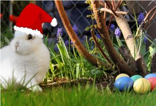 Rabbit with Easter Eggs and Christmas Hat