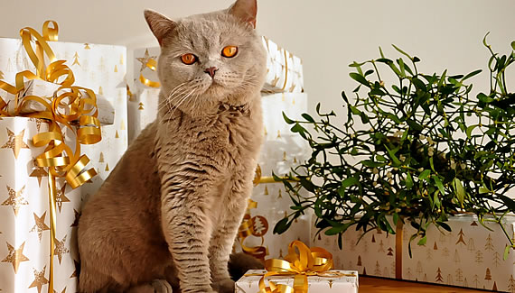 A Cat at Christmas