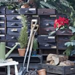 Expert advice on How to grow your own for Christmas!