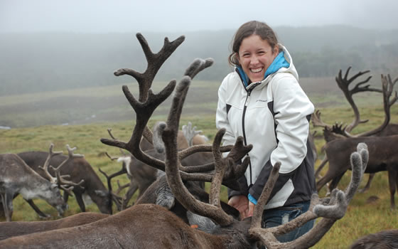 Handfeeding at The Cairngorm Reindeer Centre