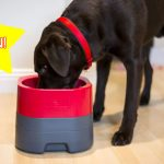 WIN one of TWO PetWeighter's dog food & water bowls