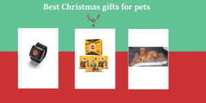 Best Christmas gifts for pets