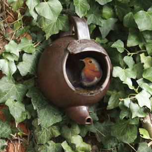 RSPCA Bird Nester