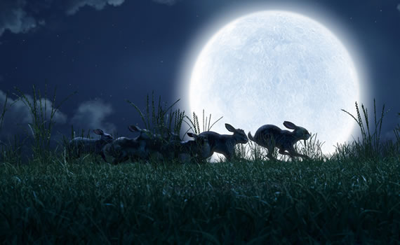Watership Down - The Journey
