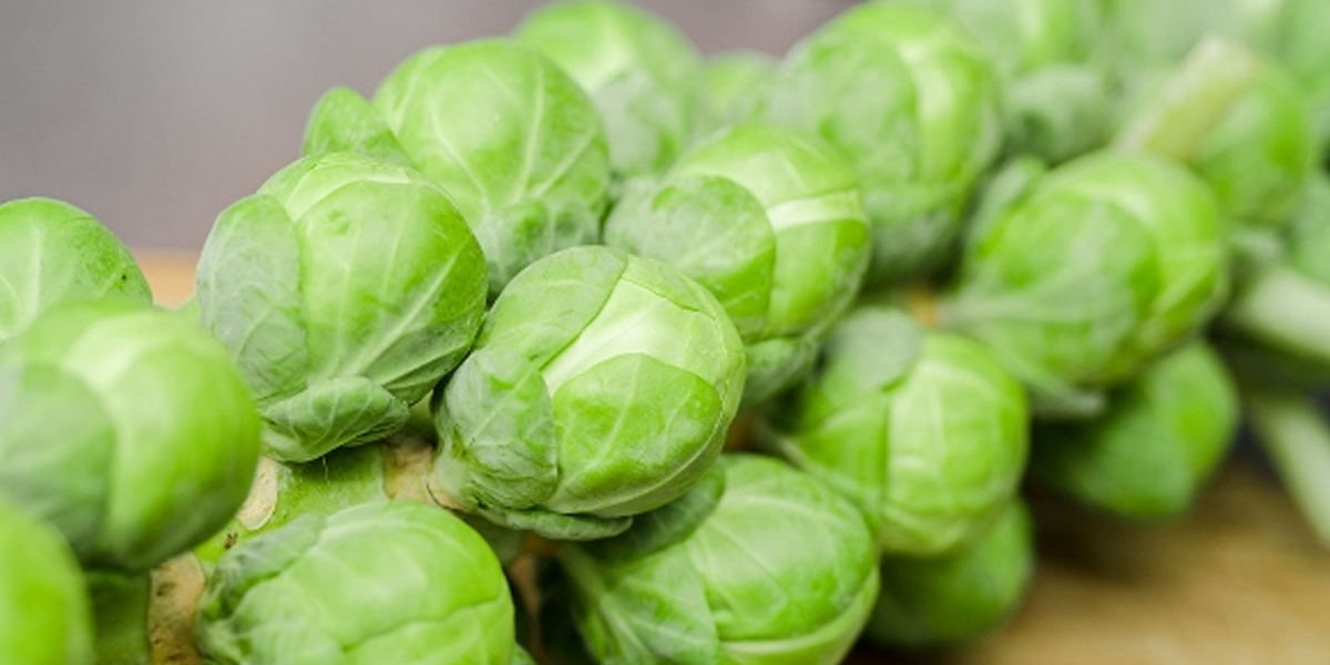 A collection of Brussels Sprouts