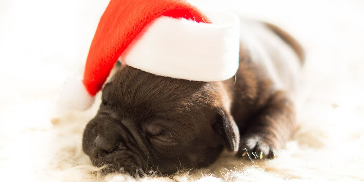 Image of puppy sleeping at Christmas