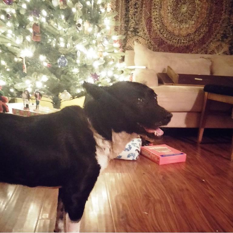 PETA - Cora the dog