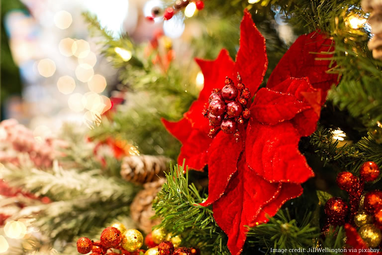 Image of Christmas poinsetta