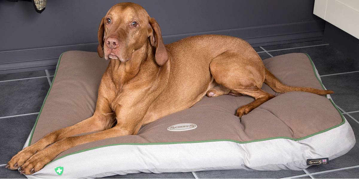 Image of Scruffs Insect Shield dog bed