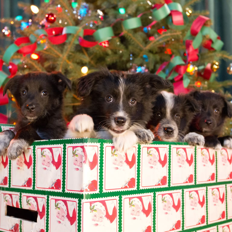 12 Dogs of Christmas - Great Puppy Rescue