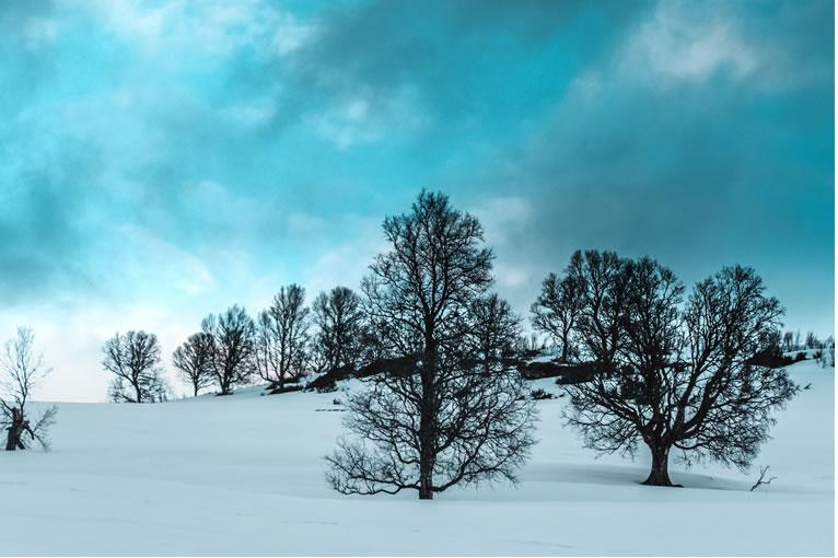 Bright Winters Day