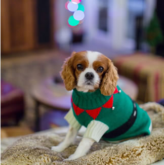 Best Christmas gifts for animals