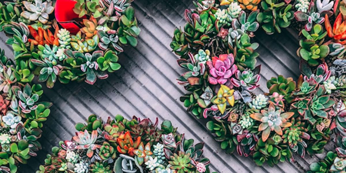 Wreath Serenta Flowers