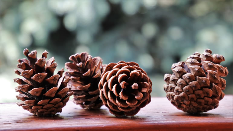 Pine cones for a garland