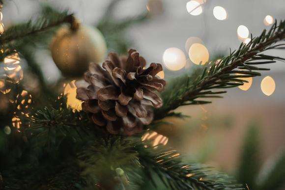 Image of Christmas tree & Acron