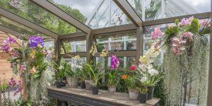 Opus Internal Large Hartley Botanic