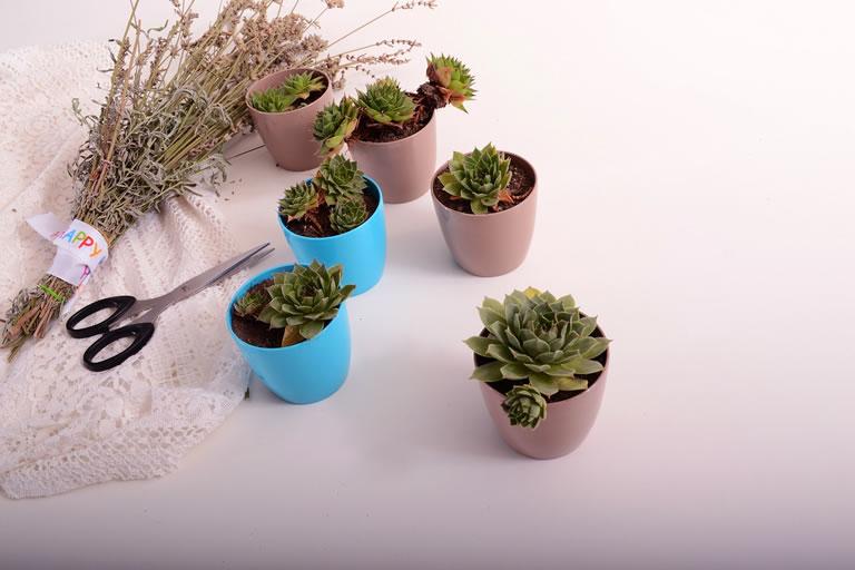 Image of indoor plants