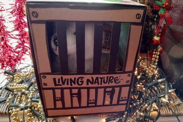 Living Nature Arctic Fox in Box